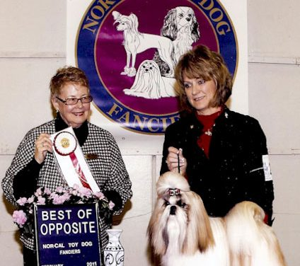 New Grand Champion: GCH. Amitzu Special Edition