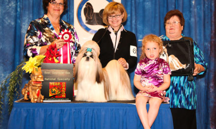 """Theo's"" Great Win at USA Shih Tzu National"