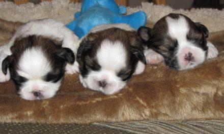 Puppy News!