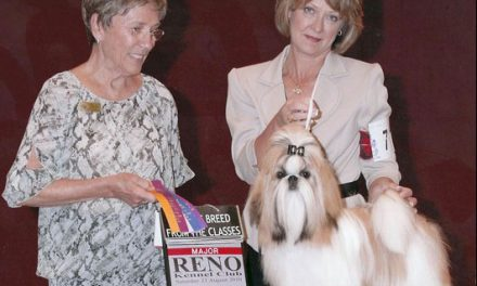 Amitzu Special Edition getting his 1st Major in Reno August 21st, Judge: Gay Dunlap