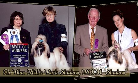 """CH Blue Hills Dark Shadow, ROM """"Shadow"""""""